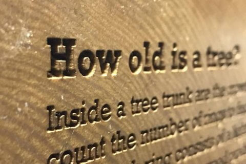 laser engraved tree trunk