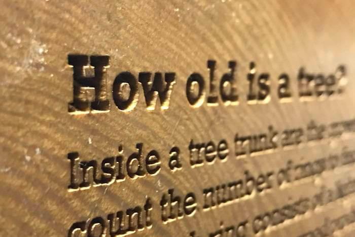 laser engraved tree trunk